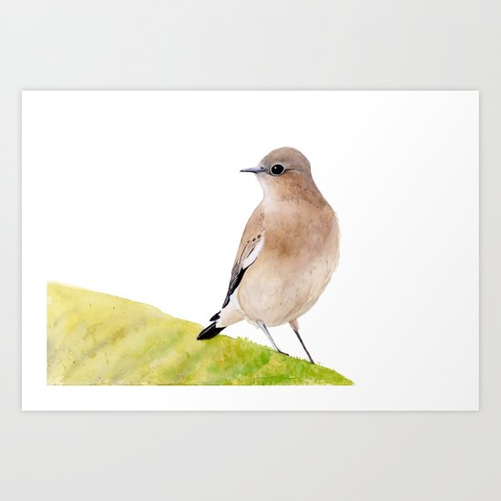 Wheatear Bird, Brown Bird, Watercolor painting  Art Print