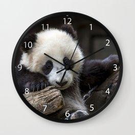 Baby panda climb a tree Wall Clock