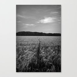 Field Track Canvas Print