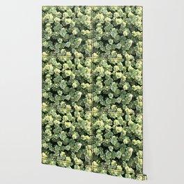Corvallis Wallpaper