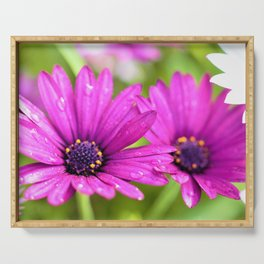Morning Dew on Purple Daisies by Reay of Light Photography Serving Tray