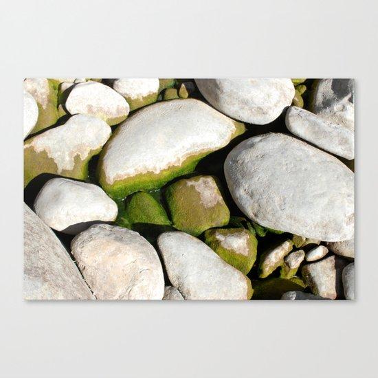 Mossy Mossy Canvas Print