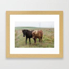 Icelandic horses - nature photography Framed Art Print