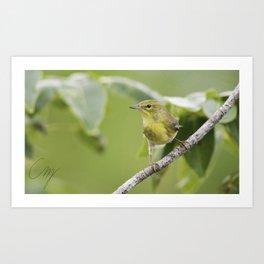 Bahama Pine Warbler Art Print