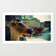 Multiple Deer is called Deer Art Print