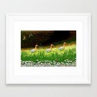ducks Framed Art Prints featuring Ducks by Raffaella315