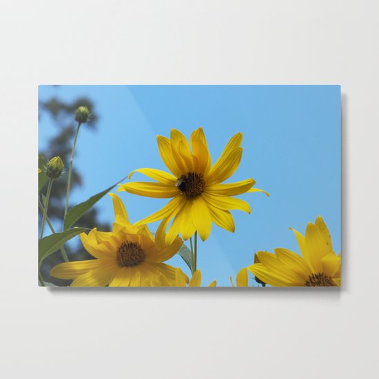 The Golden Sunflower Metal Print
