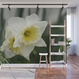 White and yellow daffodils, early spring flowers Wall Mural
