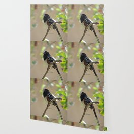 Spotted Towhee Scopes the Oak Grove Wallpaper