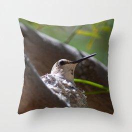 Hummingbird Momma Throw Pillow