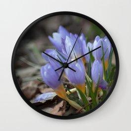 Crocus etruscus in silva Wall Clock