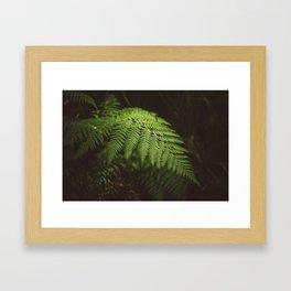 Australian Coast Fern Framed Art Print