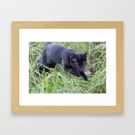 Hunting Cat Framed Art Print