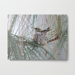Pine Veil Nesting Metal Print
