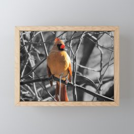 Red Female Cardinal on Black and White Trees Modern Farmhouse Picture USA A841 Framed Mini Art Print