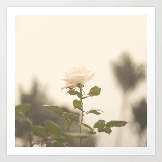 White Soft Rose (Vintage Flower Photography) Art Print