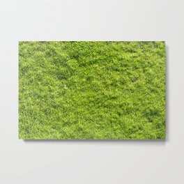 Field of fresh green grass Metal Print