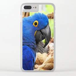 Hyacinth Macaw Clear iPhone Case