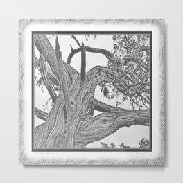 OLD JUNIPER BLACK AND WHITE VINTAGE Metal Print