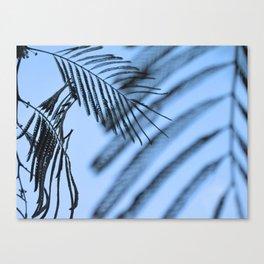 Fern leaves, Portland, Oregon 2011 Canvas Print