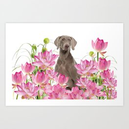 Weimaraner Lotos Flowers Art Print