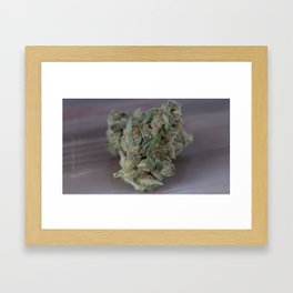 Close up macro of Dr. Who Medicinal Medical Marijuana Framed Art Print