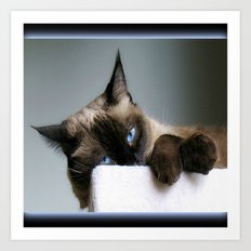 Blue Eyed Cat Art Print