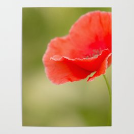 Miss you so much Red Poppy #decor #society6 Poster