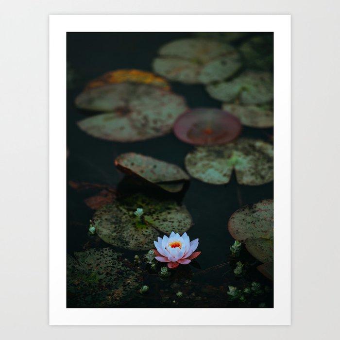 Dark Sensual Lily Pad Pond White Lotus Flower Art Print By Enshape