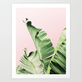Banana Leaf on pink Art Print