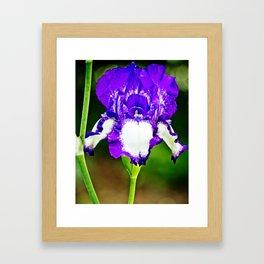Purple and Blue Iris Framed Art Print