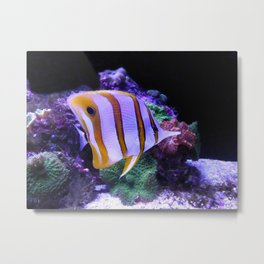 White and Yellow Butterfly Fish Metal Print