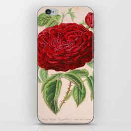 Rose Victor Trouillard Vintage Botanical Floral Flower Plant Scientific iPhone Skin
