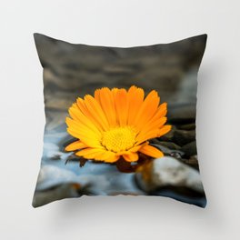 Flower Photography by amirali mirhashemian Throw Pillow