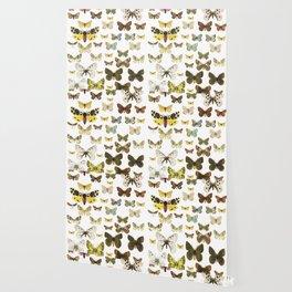 butterflys Wallpaper