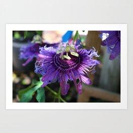 Purple Passiflora Art Print