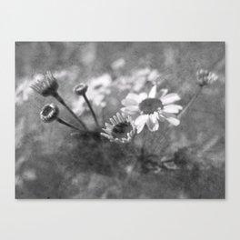 Fall Flowers... Canvas Print