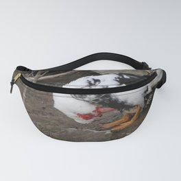 female muscovy duck in spring Fanny Pack