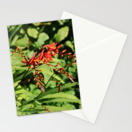 Silent Scarlet Stationery Cards