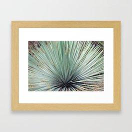 Agave Plant Framed Art Print
