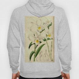 Dendrobium infundibulum Curtis' 90 (Ser. 3 no. 20) pl. 5446 (1864) Hoody