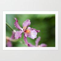 Orchid Beauty (2) Art Print