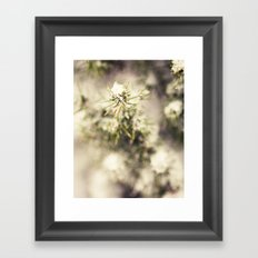 Pine Tree in the Snow Framed Art Print