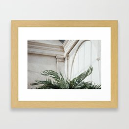Palm in Orangery Framed Art Print