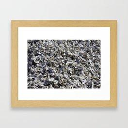 Shucked Oyster Shells Framed Art Print
