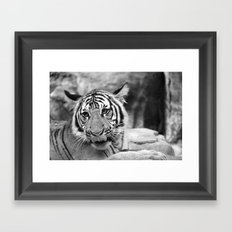 Tiger#3 Framed Art Print