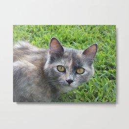 Blue Cream Tortoiseshell Kitten Metal Print