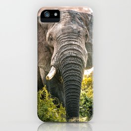 Elephant South Africa - Safari in Kruger Nationalpark iPhone Case