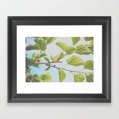 . april day . Framed Art Print
