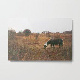 Wild Pony I Metal Print